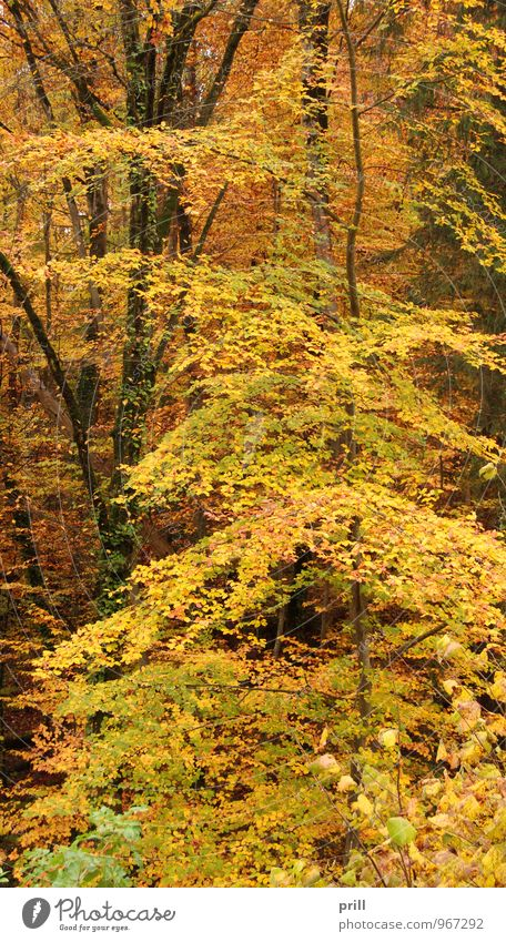 Autumn Forest Nature Plant Tree Bushes Leaf Wood Yellow Green Red Transience Germany handle Twig trunk Seasons Botany Branch inboard detail Orange shrub leafy