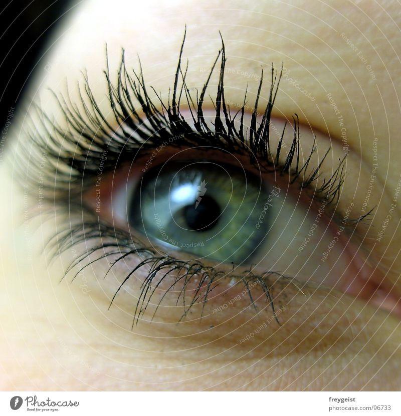 Blue Green Face Colour Eyes Gray Eyelash Pupil Iris Close-up