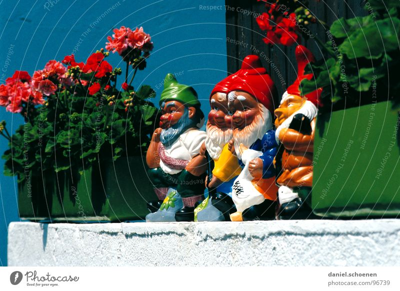 dwarf parade Dwarf Garden gnome Window Geranium Window board Summer Multicoloured Petit bourgeois Village Flower Window box Red Green Funny Germany Looking Blue