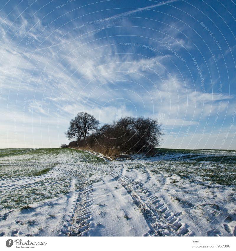 Sky Nature Tree Winter Snow Frost Tracks