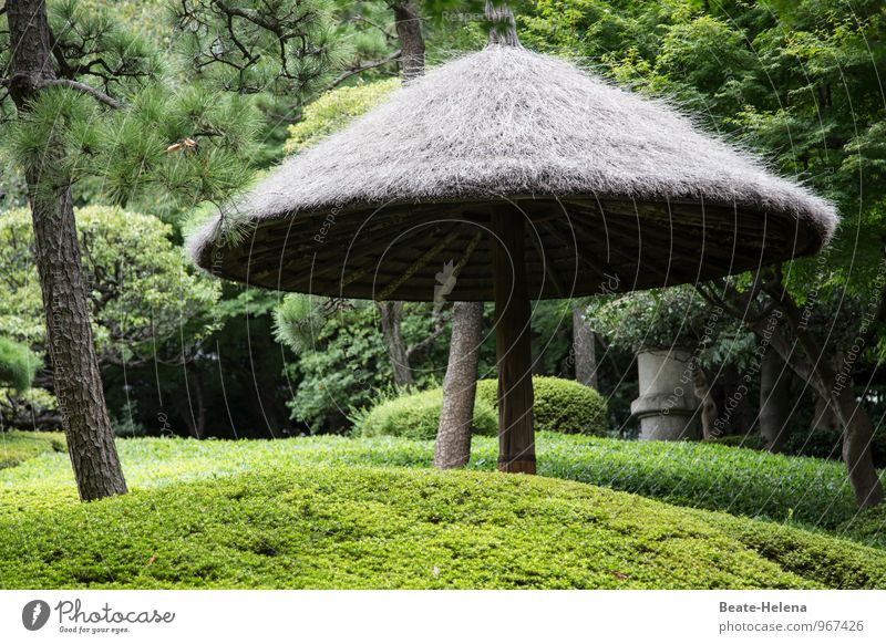 Japanese Garden Aesthetics Harmonious Well-being Relaxation Weather Tree Bushes Foliage plant Park Japanese garden Breathe Observe Discover Esthetic Exceptional