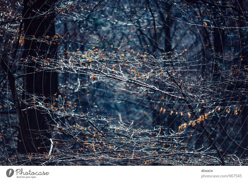 Nature Blue Plant Tree Leaf Dark Forest Environment Autumn Hiking Trip Branch Tree trunk Twig Twigs and branches Palatinate forest