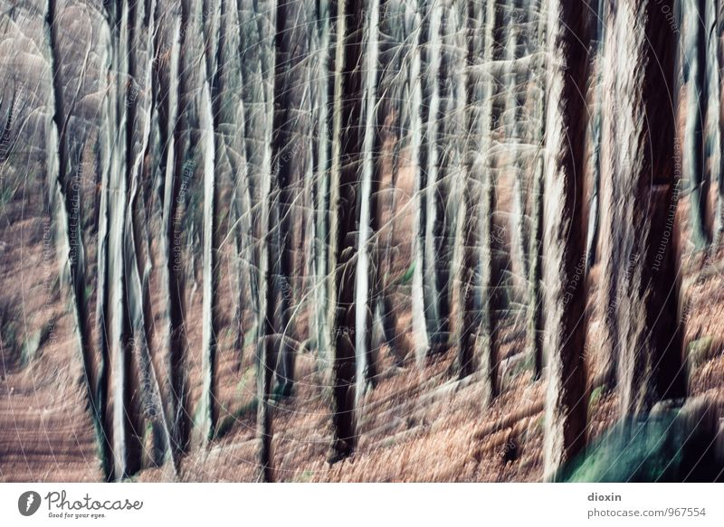 Southern Palatinate | Confusion Environment Nature Landscape Autumn Tree Tree trunk Forest Palatinate forest Impaired consciousness Irritation Colour photo