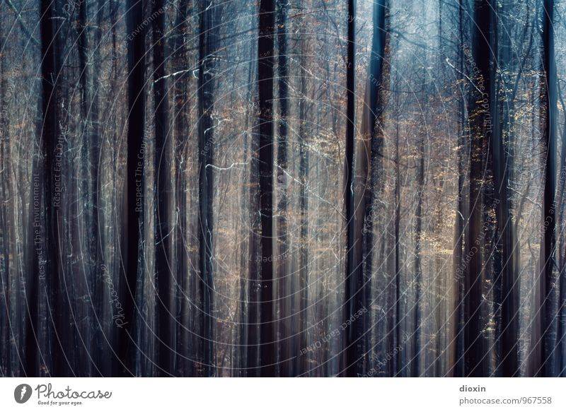 Southern Palatinate   Forest light Environment Nature Plant Tree Palatinate forest Growth Tall Flare Light Colour photo Exterior shot Experimental Deserted