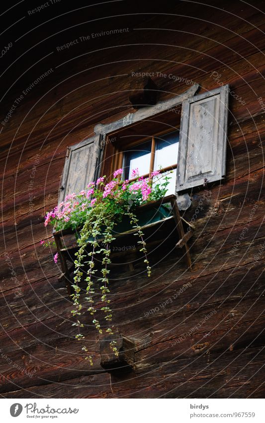 Plant Summer Flower House (Residential Structure) Window Style Facade Idyll Living or residing Authentic Blossoming Friendliness Tradition Hang Positive Rural