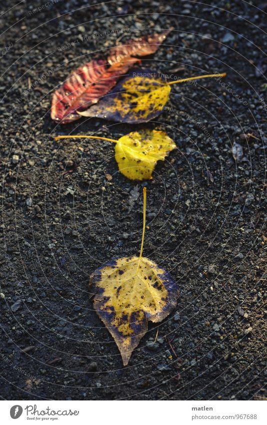 Nature Plant Red Leaf Black Lie Earth Gold Direction