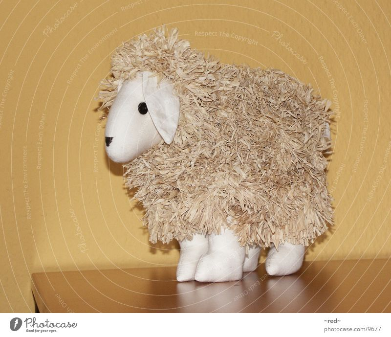 sheep Sheep Animal Decoration Junk Odds and ends Lawnmower Pet Living or residing Yoo-hoo no cow