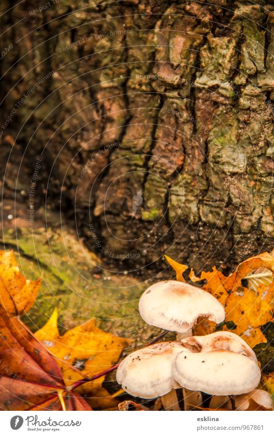 autumn niche Nature Plant Earth Autumn Tree Leaf Mushroom Forest Old Lie To dry up Growth Simple Small Near Brown Yellow Green White Moody Caution Calm