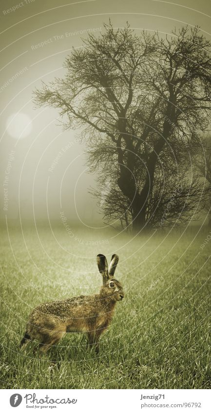 Forest Autumn Meadow Grass Moody Field Fear Fog Weather Running Escape Mammal Hare & Rabbit & Bunny Nature Morning