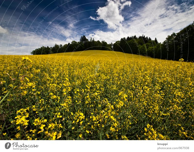 Sky Nature Blue Plant Green White Summer Sun Flower Leaf Landscape Clouds Black Environment Yellow Warmth