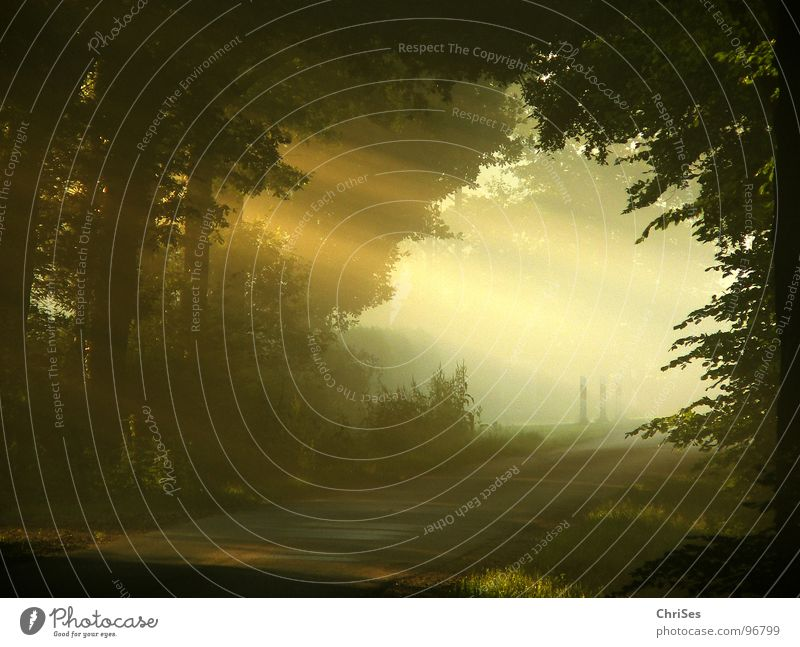 Tree Sun Summer Street Landscape Warmth Lighting Fog Romance Physics Tunnel Celestial bodies and the universe Nature Sunrise