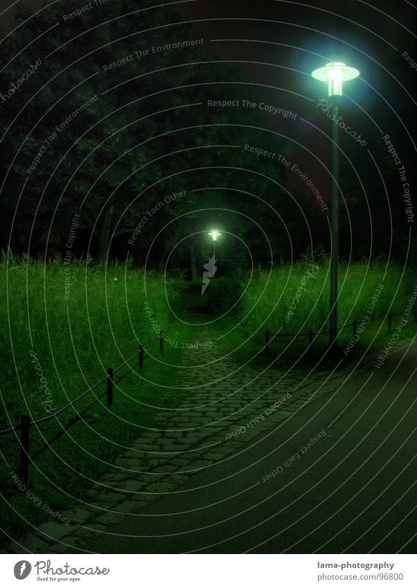 Tree Green Calm Street Lamp Dark Meadow Grass Garden Lanes & trails Park Bright Lighting Fear Wind Tall