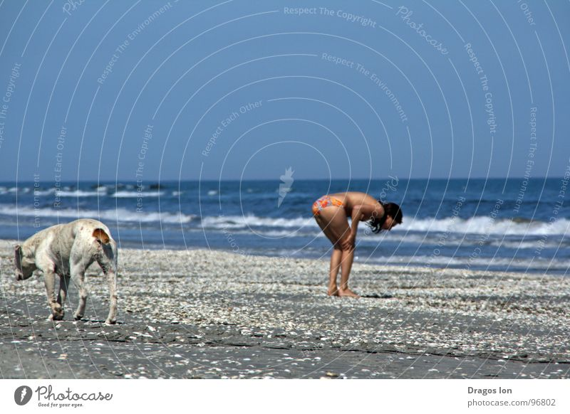 searching Beach Sky dog waves blue funny cute ingenious