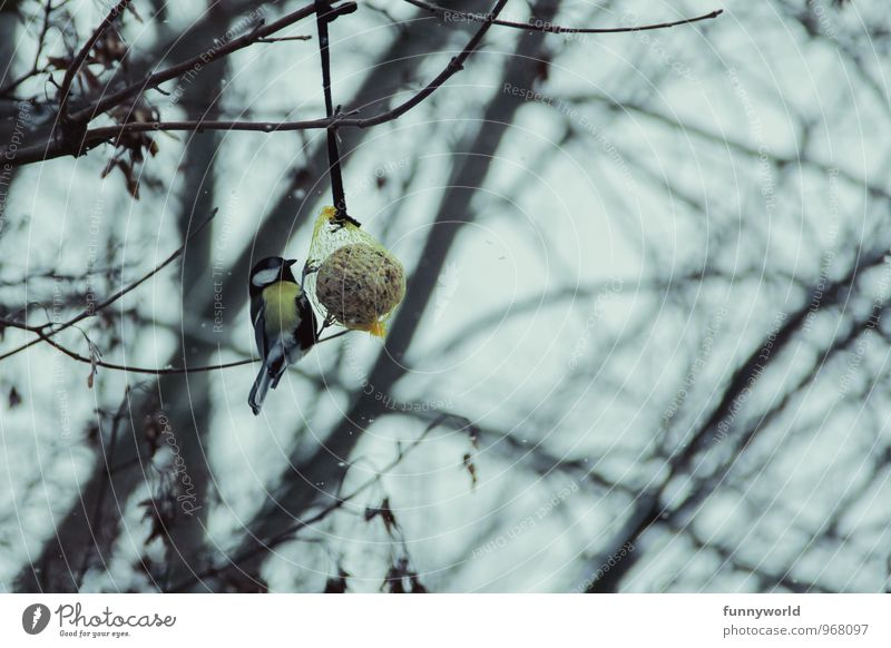 Nature Plant Tree Animal Winter Cold Environment Eating Bird Wild animal Climate Frost Climate change Branchage Feeding Songbirds