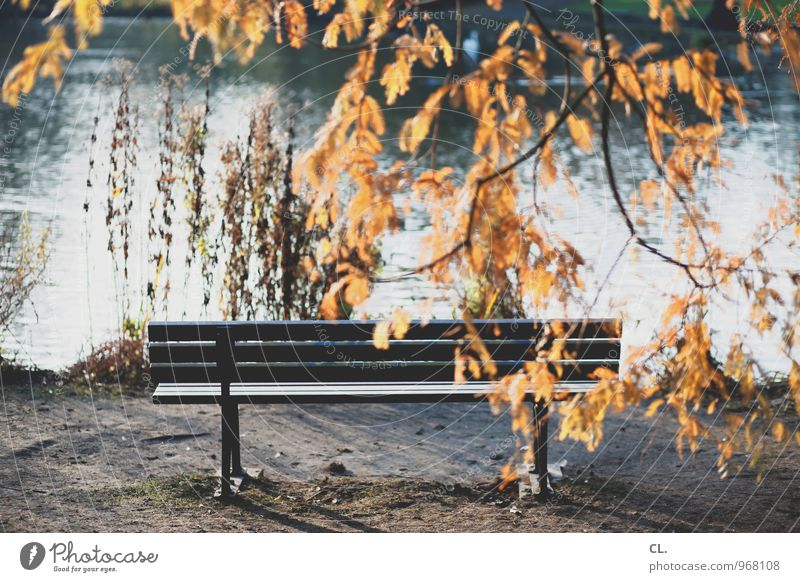 quiet zone Environment Nature Landscape Water Autumn Weather Beautiful weather Tree Leaf Park Lake Bench Calm Leisure and hobbies Idyll Break Colour photo