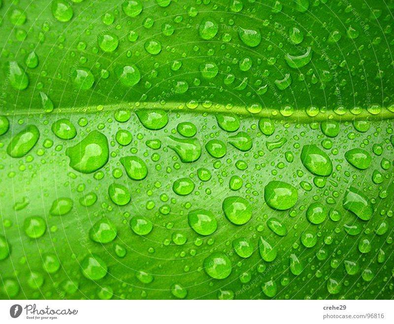 sparging Green Leaf Palm tree Drops of water Palm frond Wet Damp Summer plant Water Thirst Cast Rain