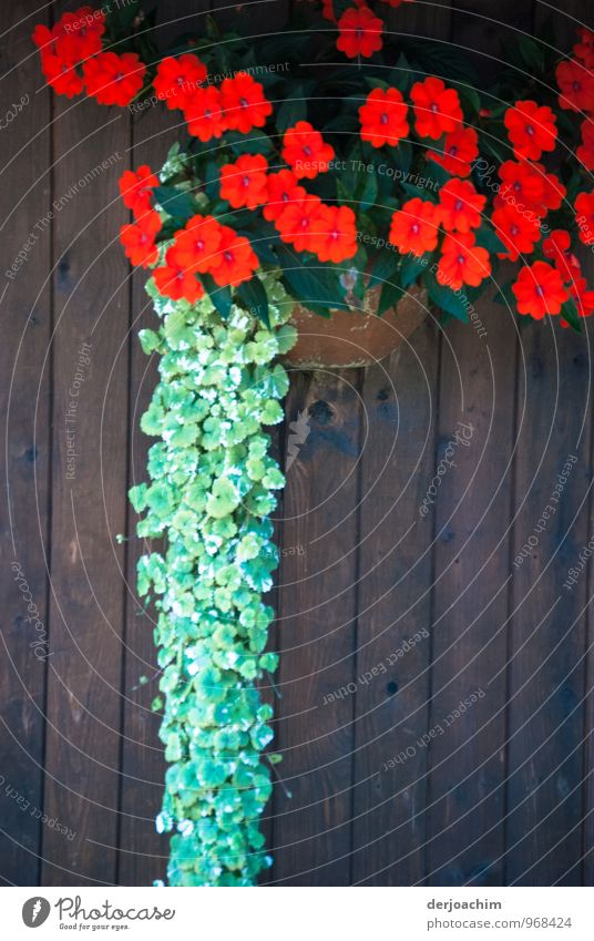 red and green Joy Well-being Trip Hiking Flower Plant Summer Blossom Foliage plant Pot plant Bavaria Germany Deserted Hut Door Observe Touch Discover To enjoy
