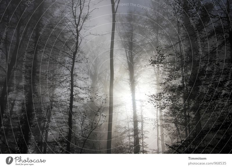 Nature Blue Plant White Sun Tree Calm Black Forest Environment Autumn Emotions Natural Wood Bright Fog