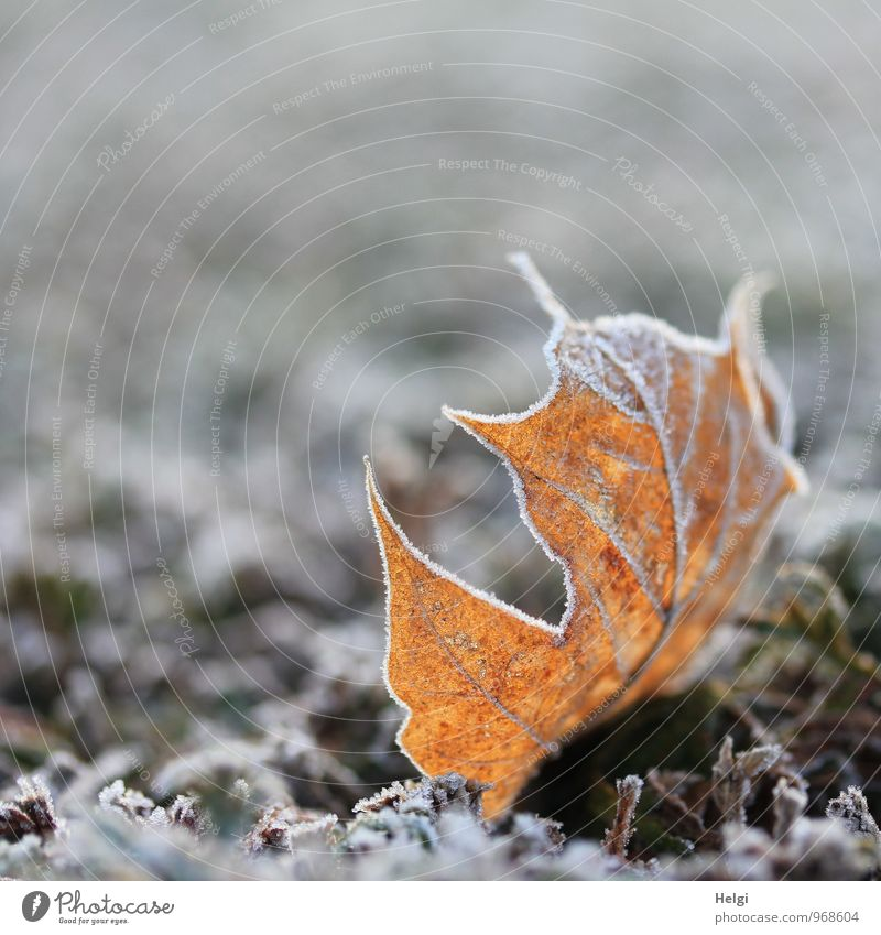 Nature Old Plant Beautiful White Leaf Winter Cold Environment Life Natural Small Gray Exceptional Brown Lie