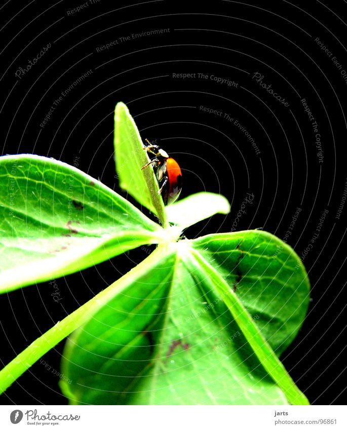Hans in Luck II Hope Desire Congratulations Ladybird Clover Cloverleaf Success Happy Joy June beetle jarts two-point ladybird