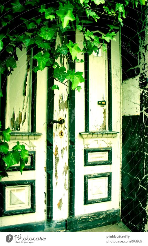Where do you think this door leads to??? Keyhole Old building Door handle Ruin Dirty White Green Mysterious Exterior shot Derelict Ivy Plant Doorframe Passage