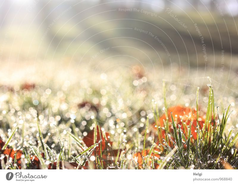 A thousand bright moments. Environment Nature Landscape Plant Drops of water Autumn Beautiful weather Grass Leaf Meadow Glittering Illuminate Growth Esthetic