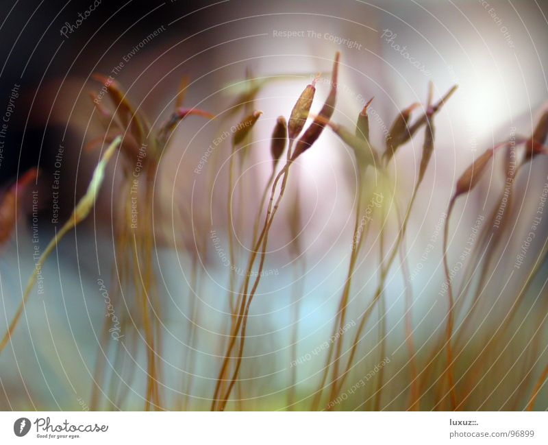 Nature Plant Stalk Blade of grass Grain Seed Muddled Delicate