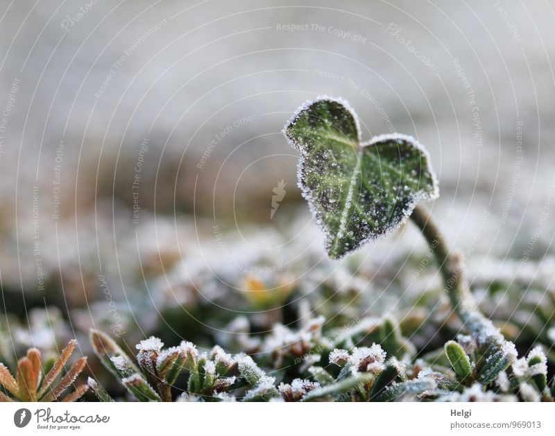 Nature Plant Green White Leaf Winter Cold Environment Life Natural Small Gray Brown Park Ice Growth