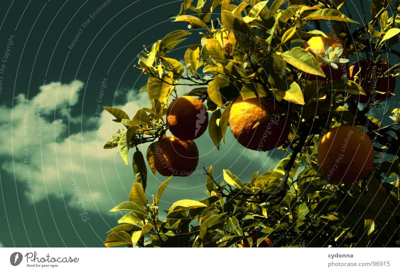 Sky Nature Vacation & Travel Green Beautiful Tree Plant Sun Summer Clouds Life Garden Park Fruit Orange Exceptional