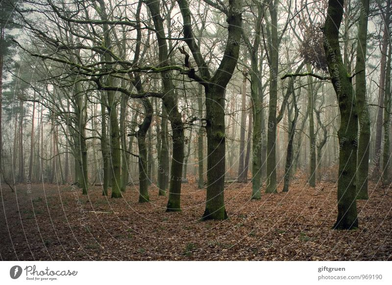 winter forest Environment Nature Landscape Autumn Winter Plant Tree Leaf Forest Dark Creepy Gloomy Apocalyptic sentiment Transience Lose Deciduous tree Sparse