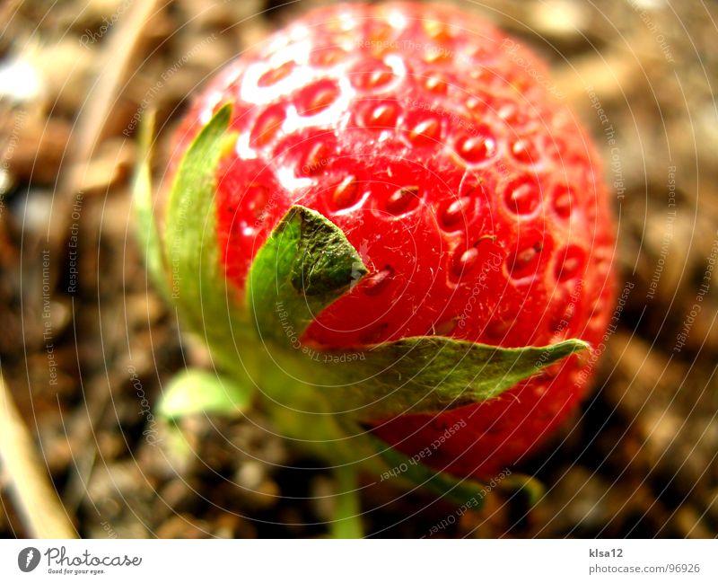 Green Fruit Earth Sweet Gastronomy Point Stalk Delicious Sense of taste Fruity