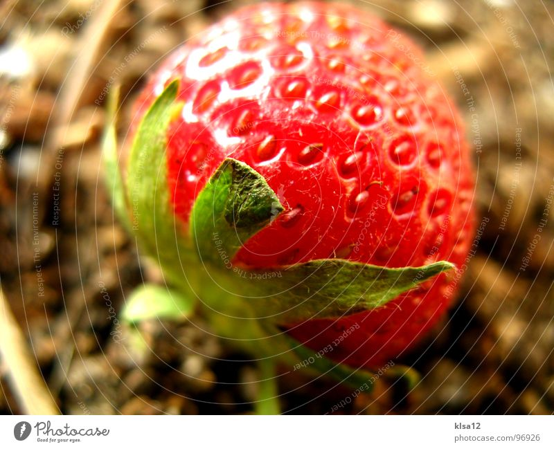 strawberry Macro (Extreme close-up) Close-up Green Sweet Sense of taste Delicious Fruity Sunlight Gastronomy red macro mode fruits Earth daylight Point Stalk