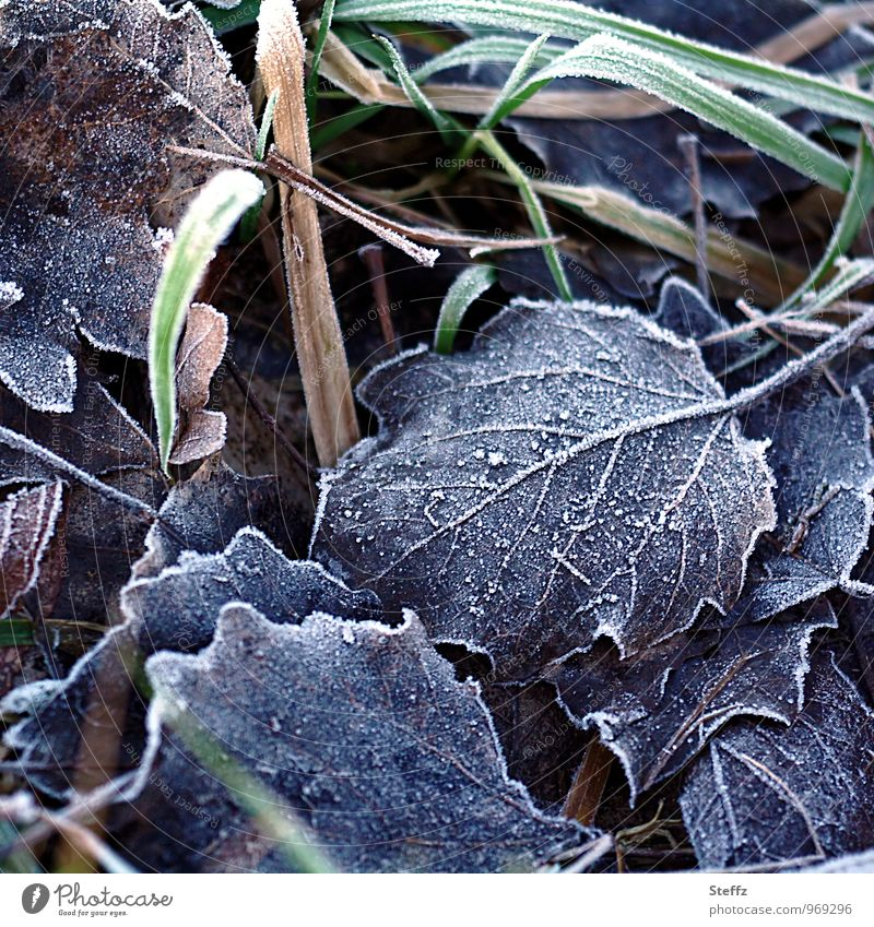winter leaves Nature Plant Winter Ice Frost Grass Leaf winter leaf Beech leaf Rachis Blade of grass Cold Winter mood Transience Hoar frost December January