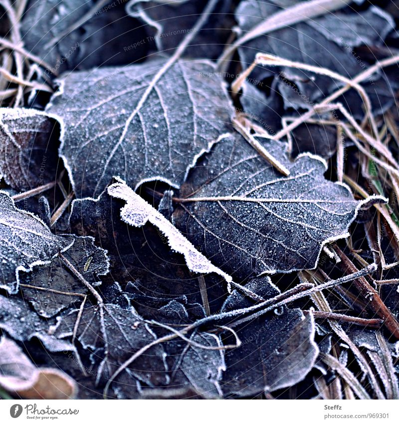 ground frost Frost frosty cold snap chill Freeze winter cold bitter Cold Winter mood Nostalgia Cold shock onset of winter Transience fallen leaves freezing cold