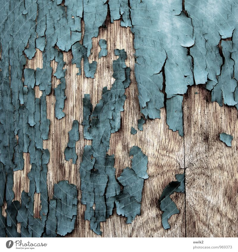 contemporary witnesses Wood To dry up Old Trashy Ravages of time Derelict Part Dye Turquoise Gray-blue Wood grain Flake off Copy Space Layer of paint Loosen
