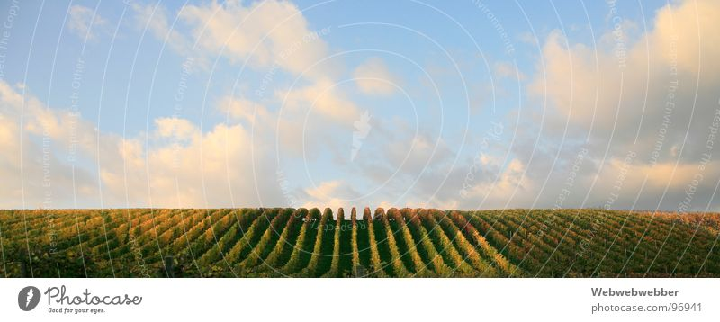 vineyards Geometry Vanishing point Vineyard Bunch of grapes Sunset Horizon Grape harvest Clouds Concentric Sky Line Railroad