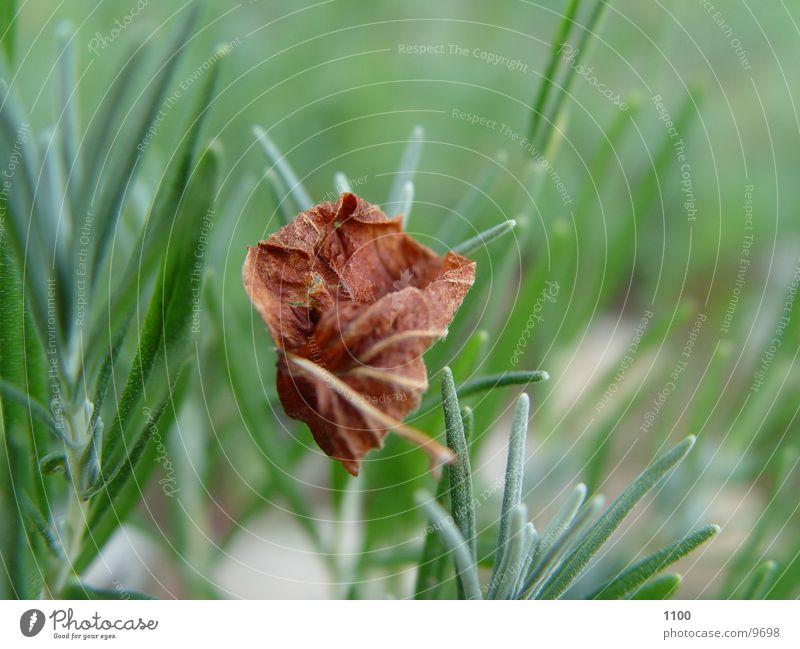 leaf Leaf Grass Green