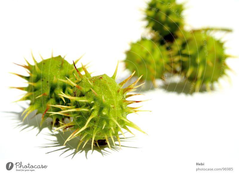 Green Summer Yellow Autumn Fear Fresh Threat Round Toys Panic Caution Thorny Thorn Pierce Extraterrestrial Sweet chestnut