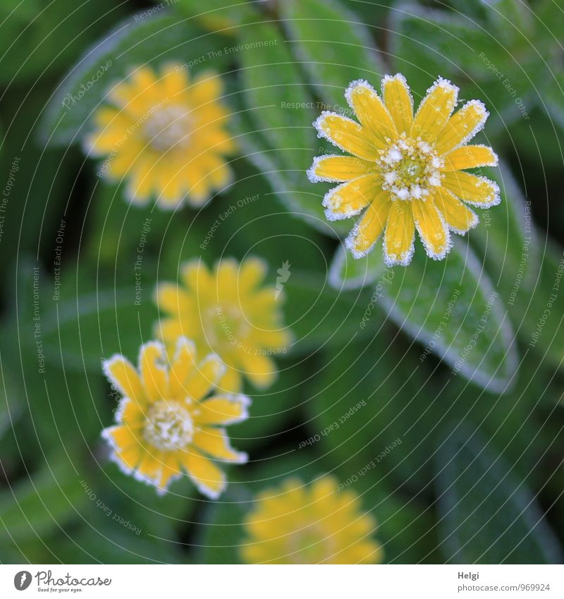 Nature Plant Beautiful Green White Flower Leaf Calm Winter Cold Environment Yellow Life Blossom Natural Small