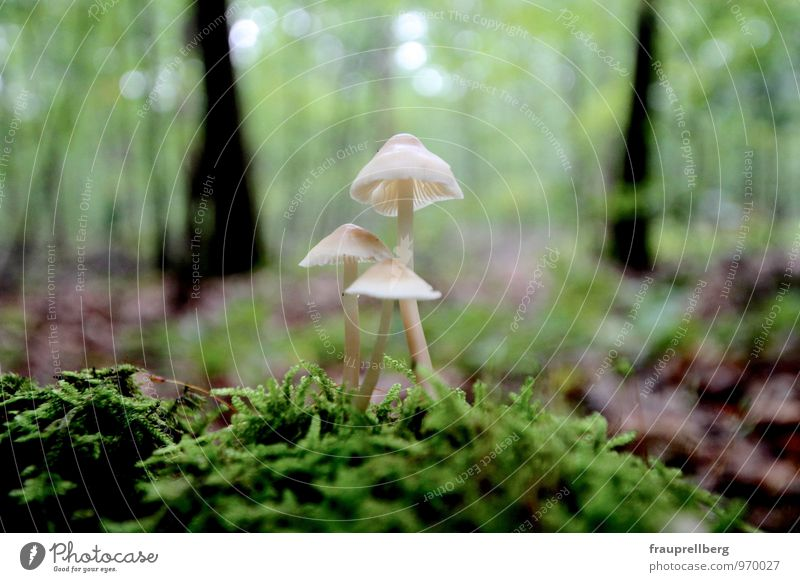 Mushrooms in the forest Nature Plant Autumn Rain Tree Moss Wild plant Forest Touch Blossoming Relaxation To hold on Looking Dream Growth Esthetic Authentic