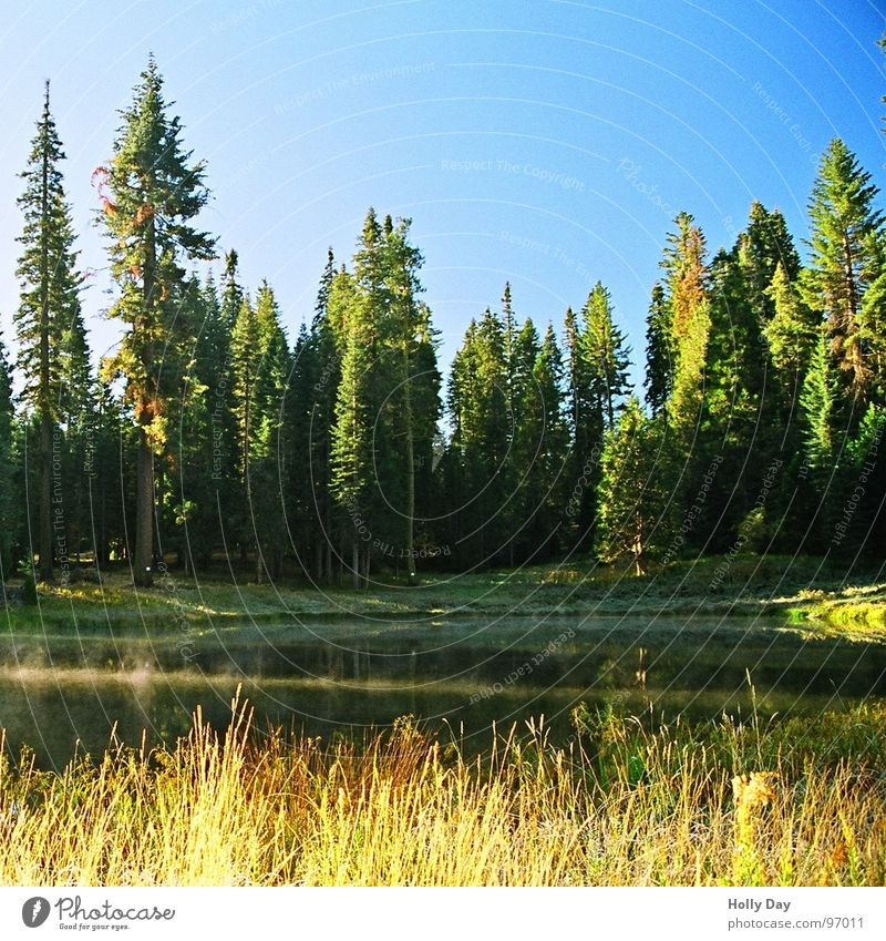Water Tree Blue Forest Cold Grass Lake Fog USA Blue sky National Park Yosemite National Park
