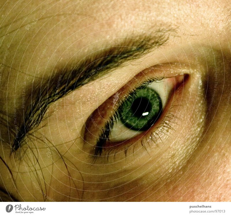 psycho Permeate Eyebrow Soul Earnest Vantage point Insight Concentrate Macro (Extreme close-up) Close-up Feeble Eyes Human being Parts of body Perspective