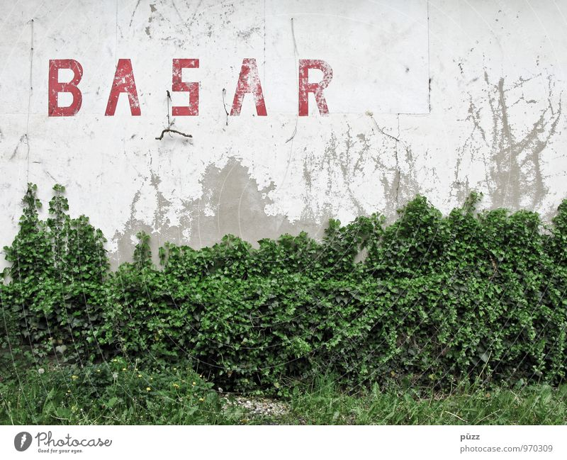 bazaar Environment Nature Plant Bushes Ivy Leaf Foliage plant Wild plant Village Small Town House (Residential Structure) Ruin Manmade structures Building