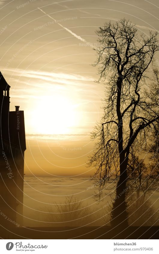 retro when there were fairy tales and legends... Nature Sunrise Sunset Fog Tree Castle Wall (barrier) Wall (building) Old Mystic Fairytale castle Clouds