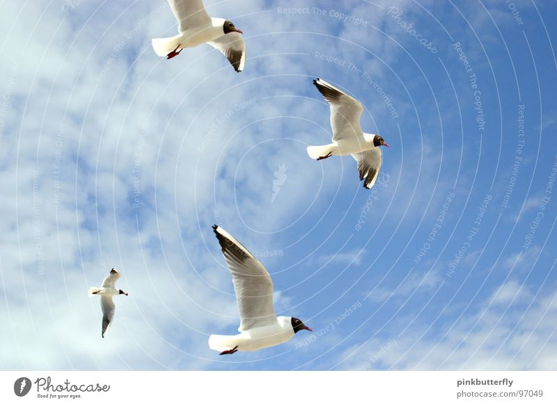 Fly up to the sky III Seagull Bird Air Hover Summer Lake Ocean Coast Vacation & Travel White Brown Relaxation Beach Clouds Colour Guide Legs Worm's-eye view