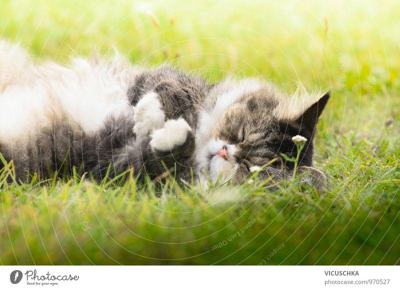 fluffy cat sleeps on grass in the sun Nature Plant Garden Park Meadow Animal Pet Cat 1 Sleep Grass Sunlight Summer Cute Pelt Gray Lie Colour photo Exterior shot