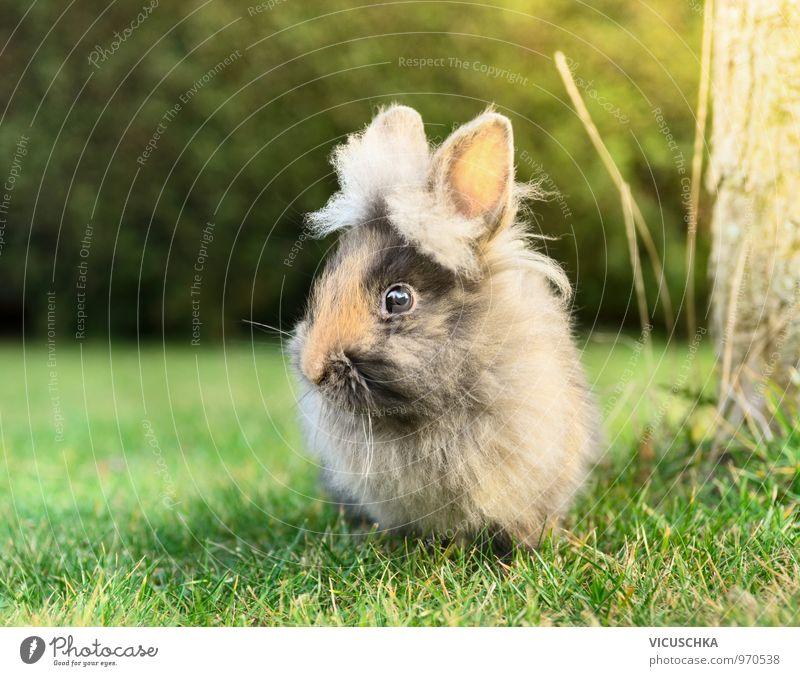 Fluffy bunnies on a green meadow Lifestyle Leisure and hobbies Garden Baby Nature Spring Summer Animal Pet Farm animal Animal face Pelt 1 Hare & Rabbit & Bunny