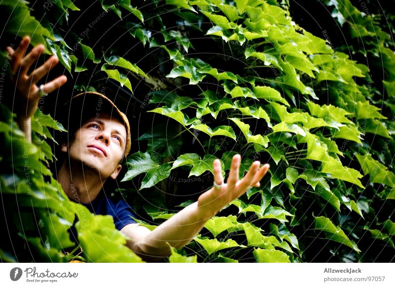 Gärtners Delight Leaf Green Virgin forest Hand Man Beseeching Desire Plead Green thumb Gardener Masculine Plant Flourish Growth Sprout Power Force Hope Nature