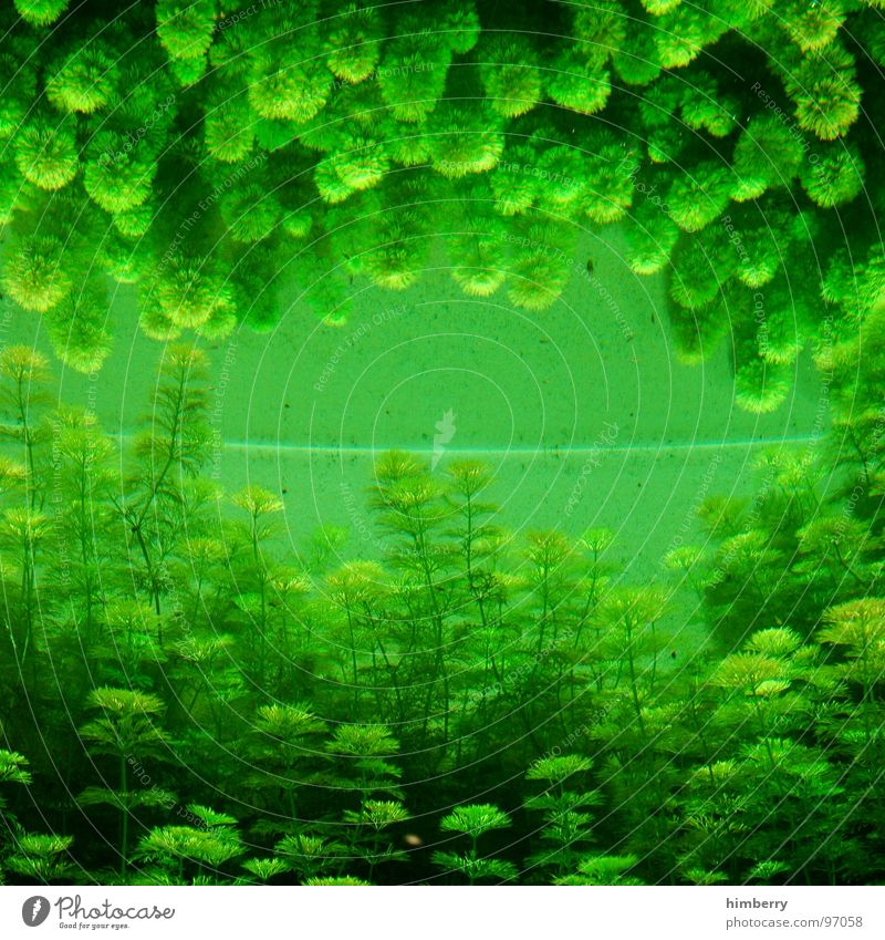 fishtank III Aquarium Plant Zoo Algae Green Mirror Reflection Ocean Fish seaworld aquazoo Water gree