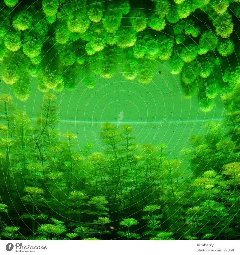 Water Ocean Green Plant Fish Mirror Zoo Aquarium Algae